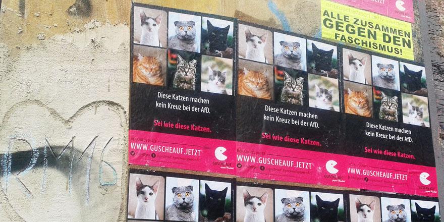 Foto Katzen-Plakat 2019